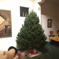 Photo of Green Valley Christmas Trees - Mountain View, CA, United States ...