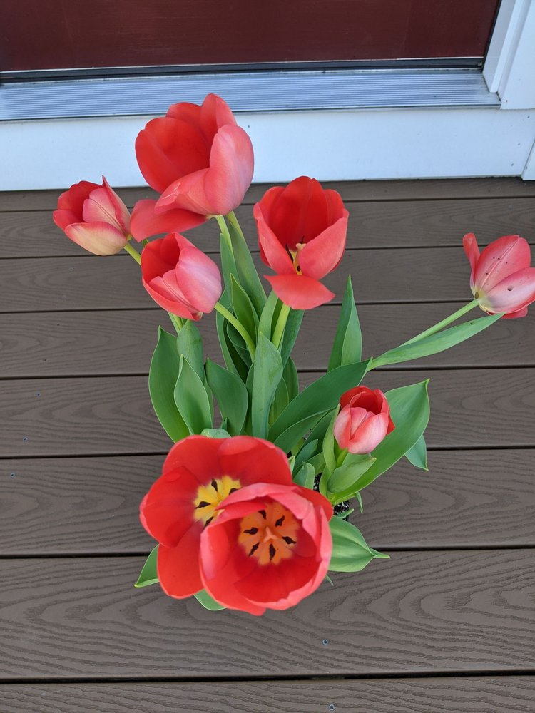 Merrimack Flower Shop & Greenhouse: 4 Railroad Ave, Merrimack, NH