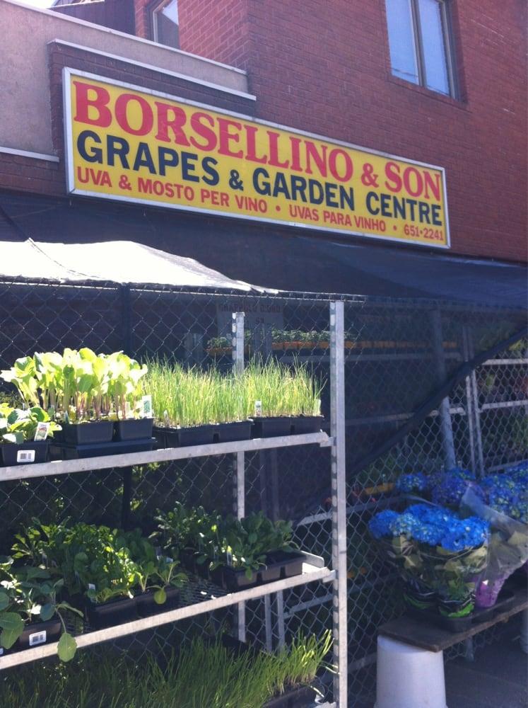 Borsellino & Son Grape Importing