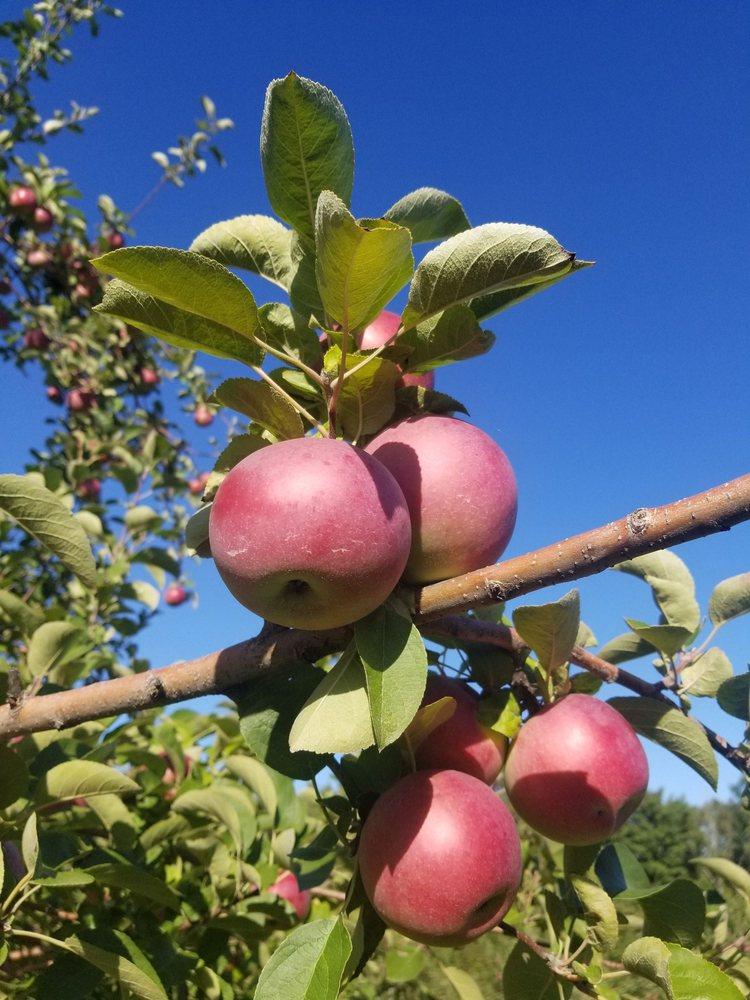 Dole's Orchard: 187 Doles Ridge Rd, Limington, ME
