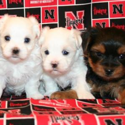Sandhills Puppy Paws - 14 Photos - Pet Breeders - 601 4th St