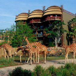 Disney S Animal Kingdom Lodge 993 Photos 334 Reviews Hotels