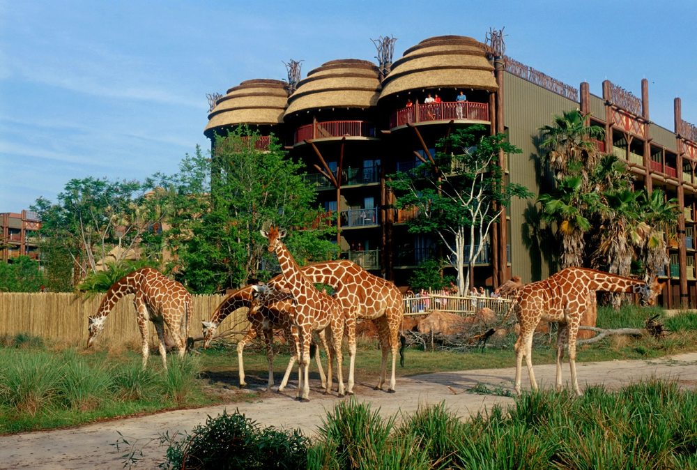 Disney S Animal Kingdom Lodge 947 Photos 313 Reviews Hotels 2901 Osceola Parkway Blvd World Orlando Fl Phone Number Last Updated