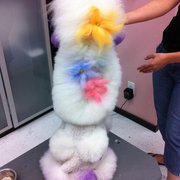 The dog wash inc pet groomers 1500 royal york road etobicoke feline fantasy 3rd photo of the dog wash inc etobicoke on canada solutioingenieria Gallery