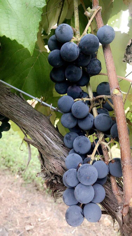 Pleasant Hill Winery: 1441 Salem Rd, Brenham, TX
