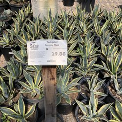 Photo Of Star Nursery Las Vegas Nv United States Love Prices