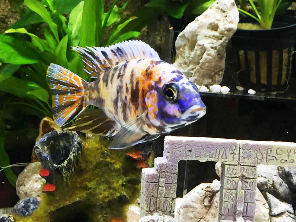 Reef Tropical Fish