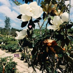 Photo Of Living Color Garden Center   Fort Lauderdale, FL, United States. I