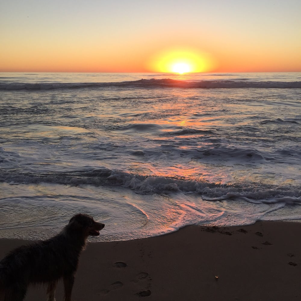 A dog takes in sunset at  Del Mar Dog Beach