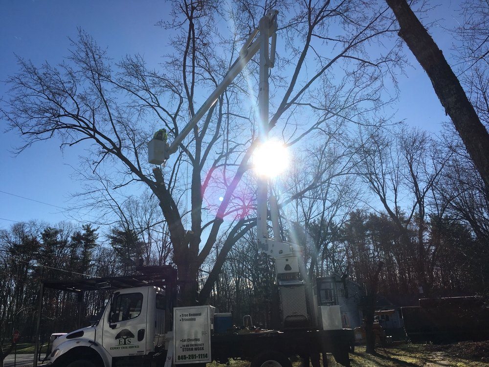Expert Tree Service: 315 Glasco Tpke, Saugerties, NY