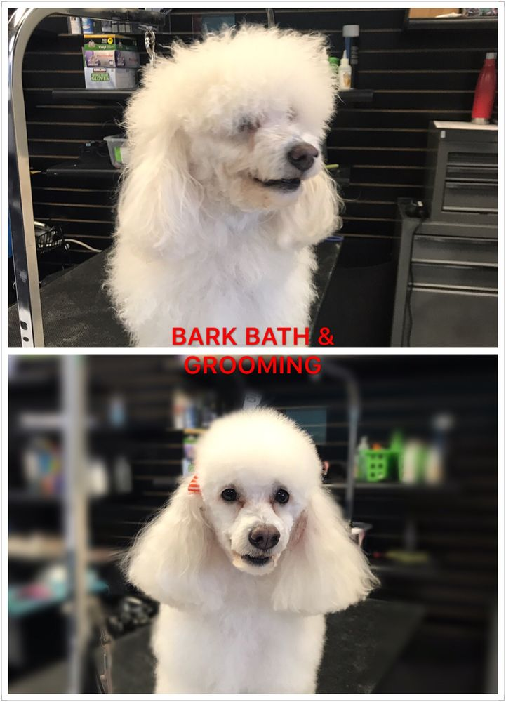 Photos for bark bath self serve dog wash grooming yelp photo of bark bath self serve dog wash grooming costa mesa ca solutioingenieria Choice Image