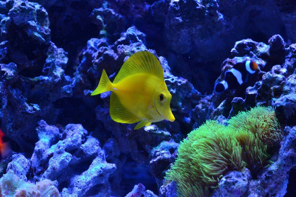 Worldwide Fish and Pets: 61 Amity Rd, New Haven, CT