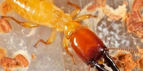 Maximum Termite & Pest Control, Inc: 2177 Bethel Hygiene Rd, Bethel, OH