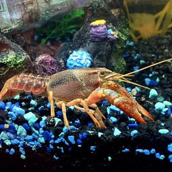 Sierra aquatics closed 48 photos 42 reviews pet for Fish store reno