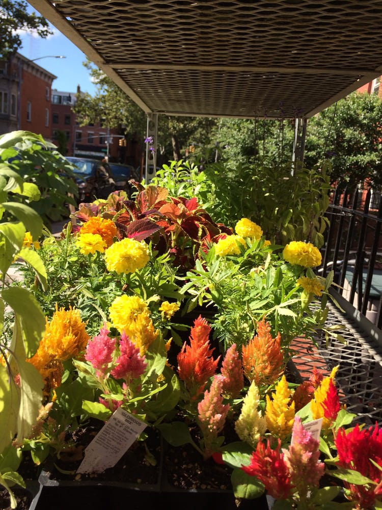 Gardel's Garden: 97 S Portland Ave, Brooklyn, NY