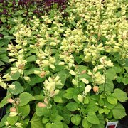 Photo Of Frank Otte Nursery U0026 Garden Center   Louisville, KY, United States.