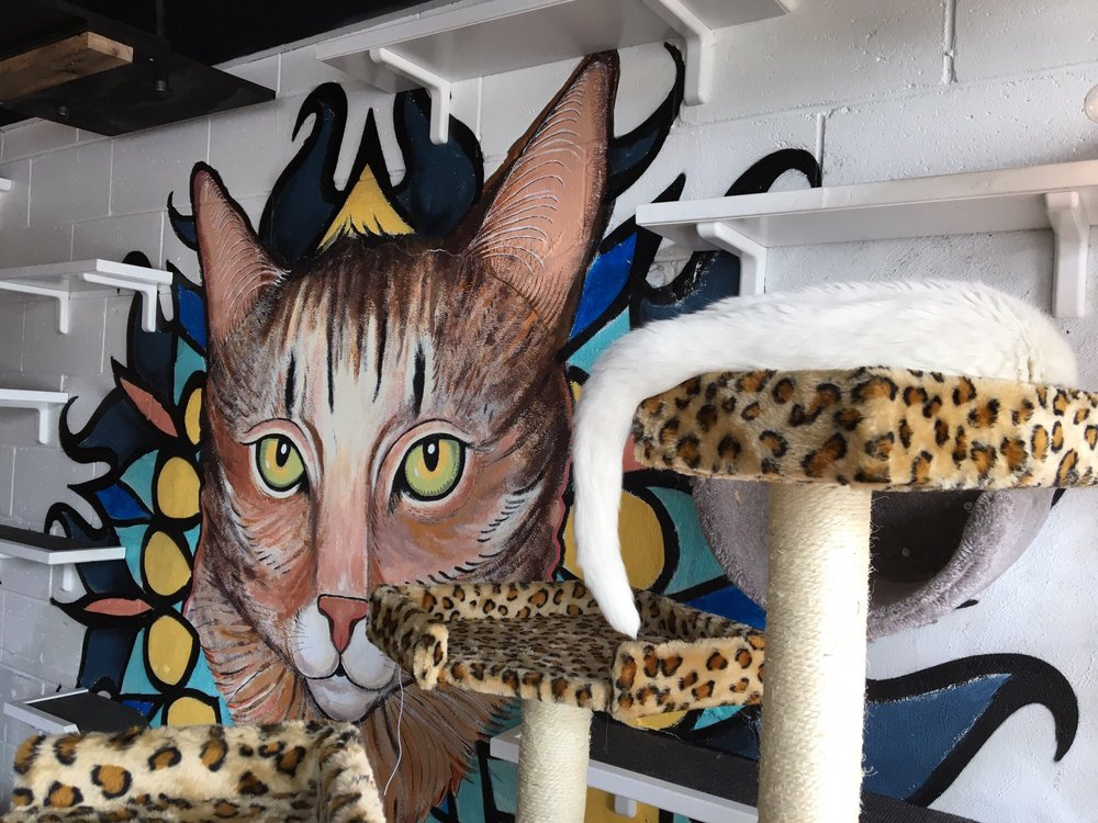 Java Cats Cafe