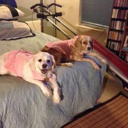Fancy Dog Mobile Pet Grooming Pet Groomers San Antonio