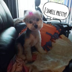 Sudzy puppy 12 photos 45 reviews pet groomers 417 e ogden photo of sudzy puppy naperville il united states solutioingenieria Choice Image