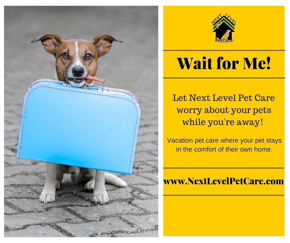 Next Level Pet Care: Worcester, MA