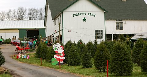 Starlyte Christmas Tree Farm: 223 Old Philadelphia Pike, Douglassville, PA