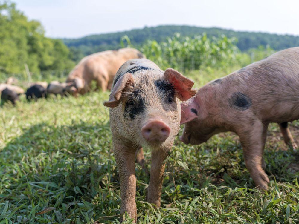 Caney Fork Farms: Carthage, TN