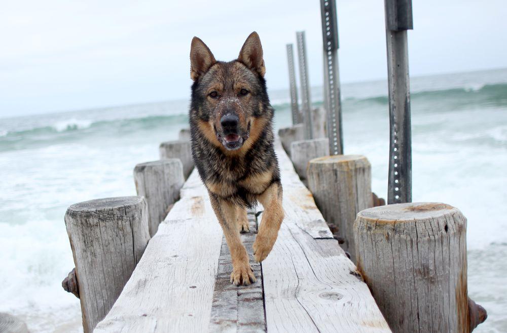KRUSHK9 Dog Training Services: Blackwood, NJ
