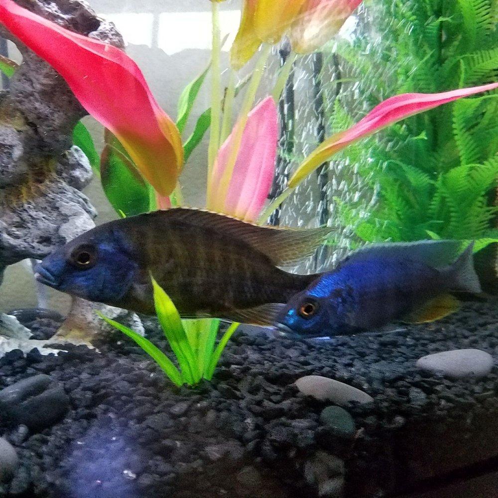 Golden Fish Aquariums: 7145 W Colfax Ave, Lakewood, CO
