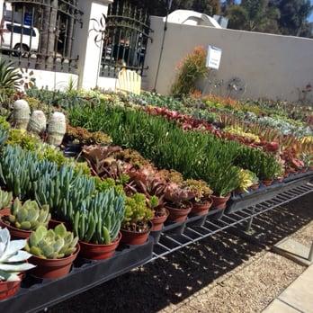 Photo Of Modern Oasis Garden Patio Ventura Ca United States A
