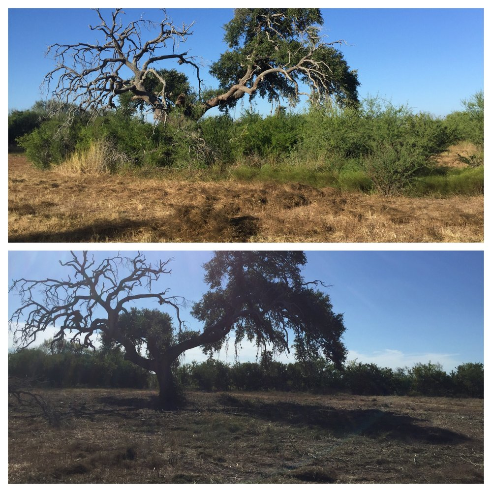South Texas Land Clearing: Beeville, TX