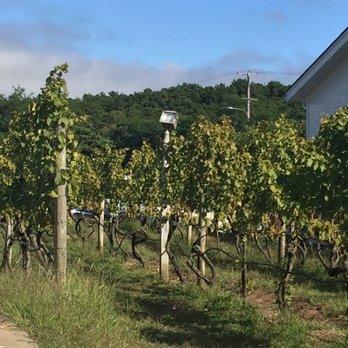 Truro Vineyards of Cape Cod - 248 Photos & 190 Reviews