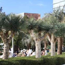 Photo Of Trees And Palms Austin Tx United States Yucca