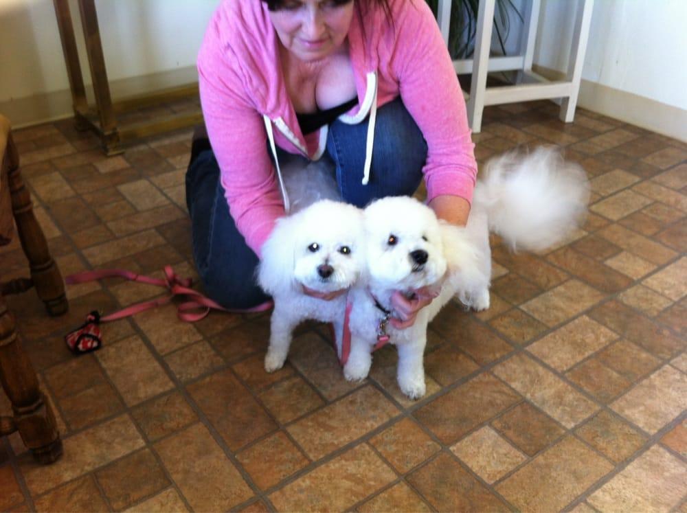 Dog Town Pet Grooming Phoenix Az