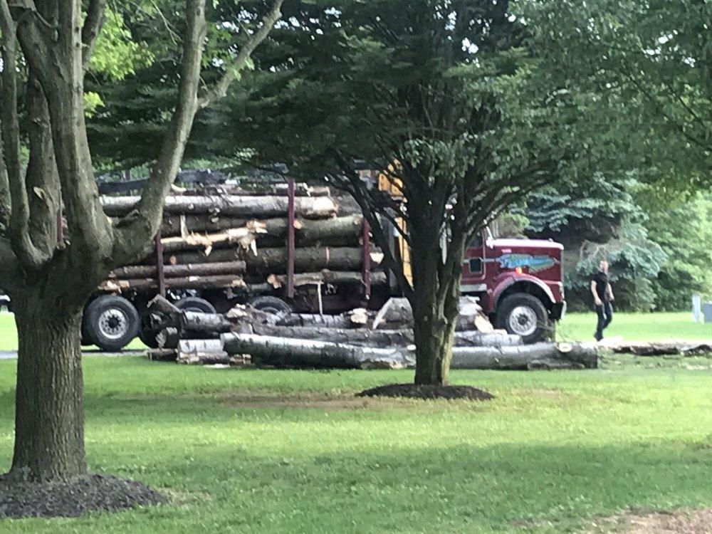 Timber Pros Tree Service: Newport, MI