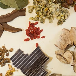 American college of traditional chinese medicine 58