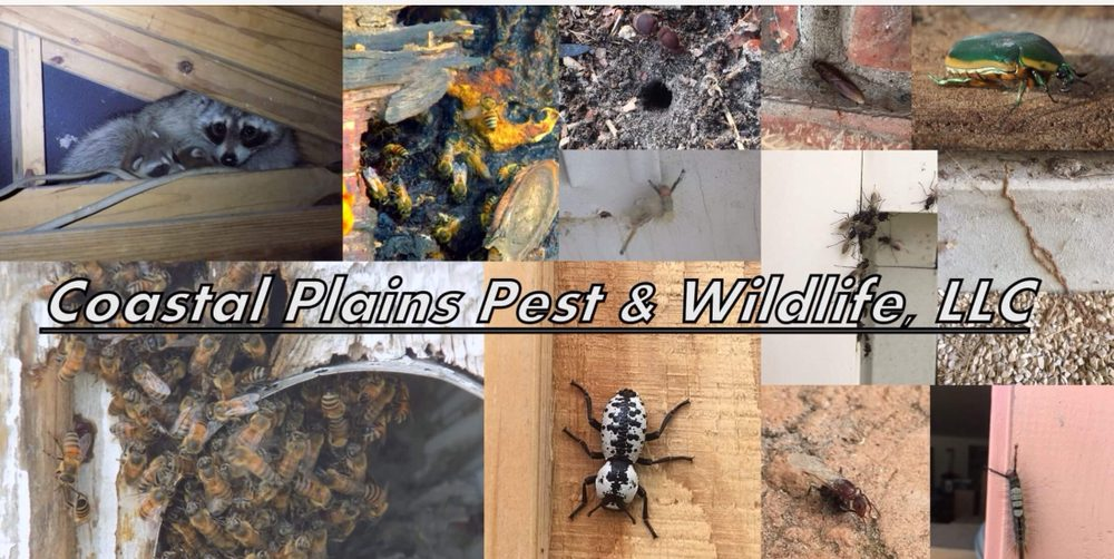 Coastal Plains Pest & Wildlife: Ingleside, TX