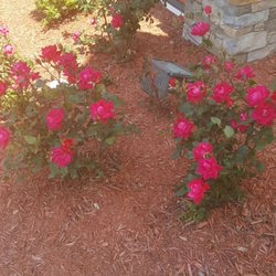 Photo Of Wilson S Nursery Garden Center Rock Hill Sc United States