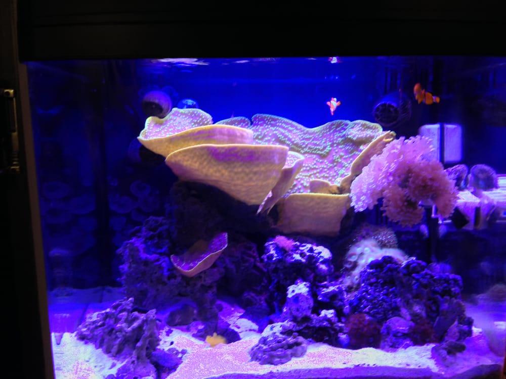 read write and think biocube aquarium