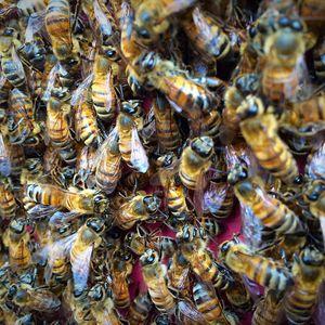 Bee Green Natural Bee Removal - 84 Photos & 234 Reviews