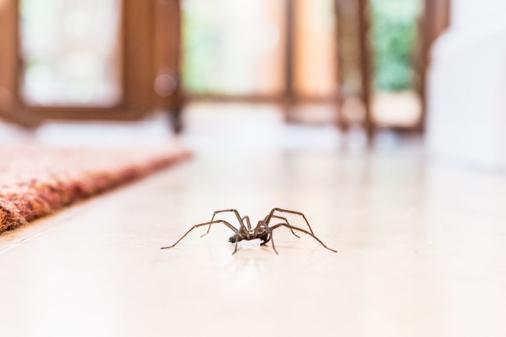 Jackson Pest Management: 5819 Hollopeter Rd, Leo, IN