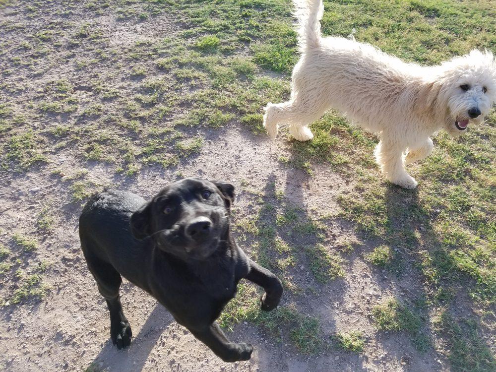Dog Boarding Buckeye: 12803 S 186th Ave, Buckeye, AZ
