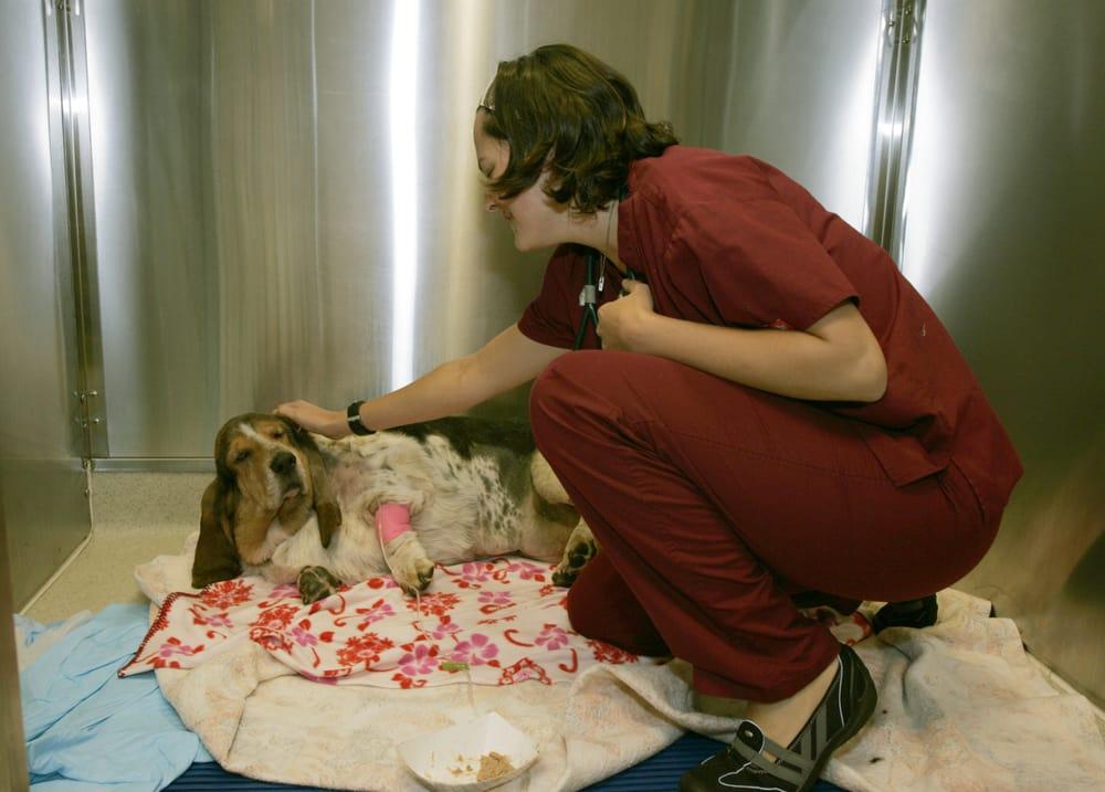 Dovelewis 24 Hour Emergency & Icu Animal Hospital - Northwest | 1945 NW Pettygrove St, Portland, OR, 97209 | +1 (503) 228-7281