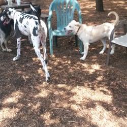 Friends Of Millbrook Dog Park