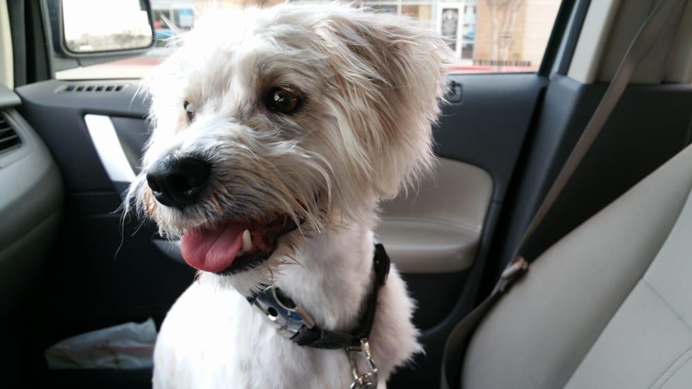 Frisco (TX) United States  City pictures : Petco Pet Shops Frisco, TX, United States Reviews Photos ...