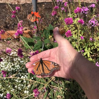 Charmant Photo Of Butterfly Farms   Encinitas, CA, United States