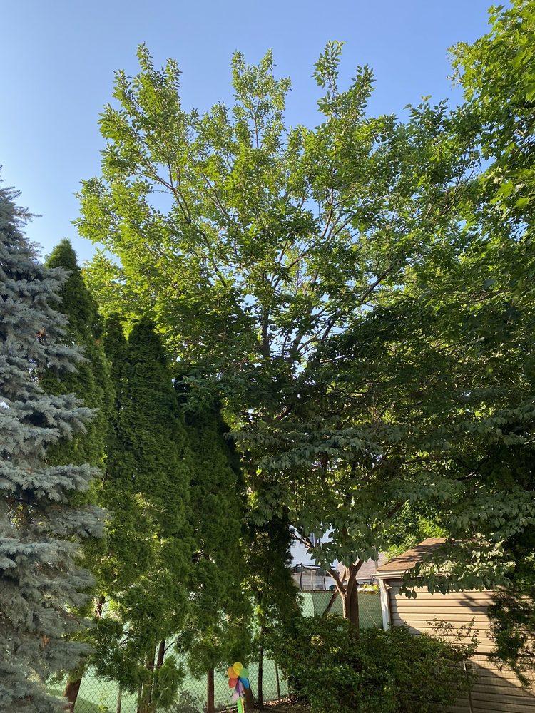 Antonio Tree Service: 1403 Rosser Ave, Elmont, NY