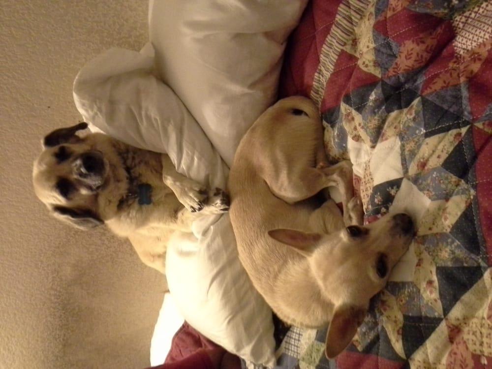 Compassionate Pet Sitting Services: 3075 Garner Ln, Clearlake, CA