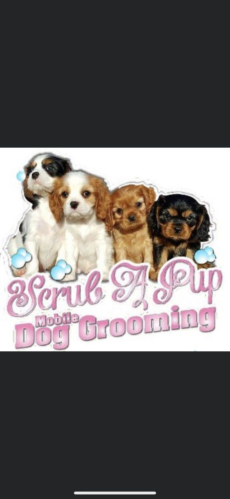 Scrub A Pup Mobile Dog Grooming: East patchogue, NY