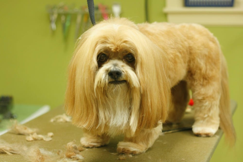 PawFect Grooming: 1456 Kennedy Blvd, Aliquippa, PA