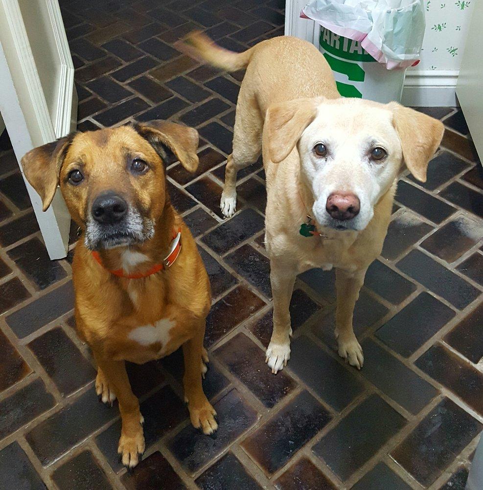 Bloomfield Pet Care: Bloomfield Hills, MI